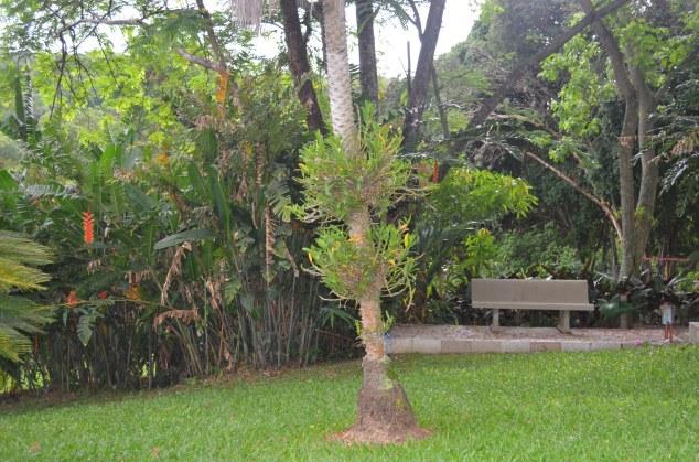 o banco e a orquídea pendurada na árvore. Típico de vó #amomuitojardimdevó
