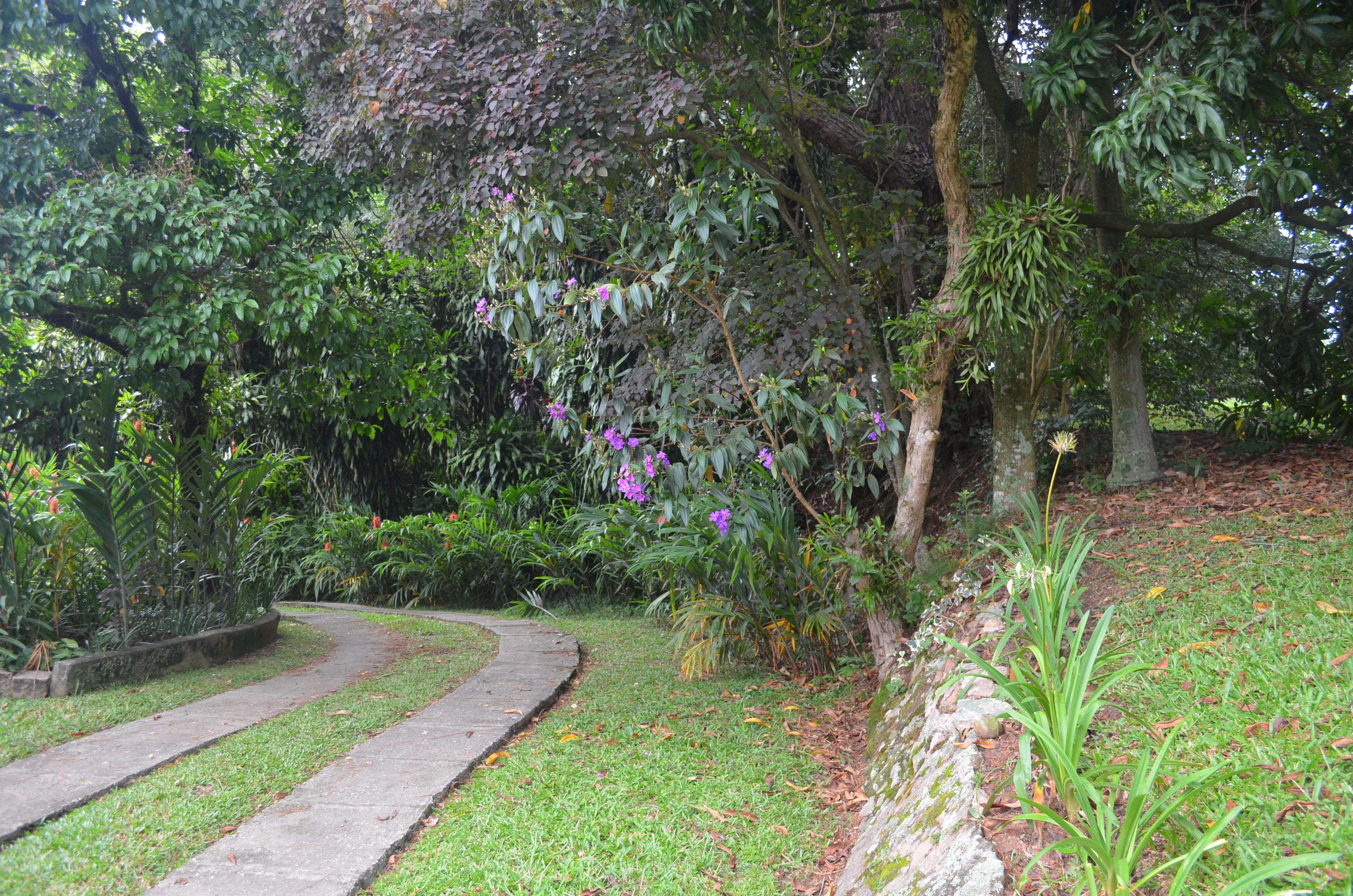 plantas jardim vertical meia sombra:caminho com maciços de plantas de meia-sombra. Anos e anos aí