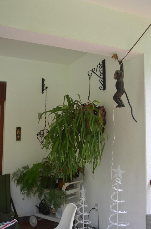 o macaco pendurado, o chifre de veado enorme e a renda portuguesa!