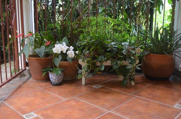 o outro lado da varanda. Mais plantas lindas de Omi!