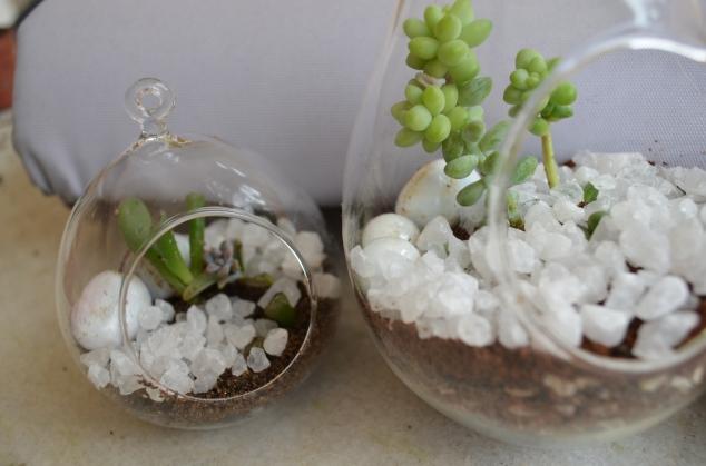 terrários plantados