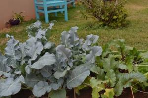 Olha o brócoli, que enorme!