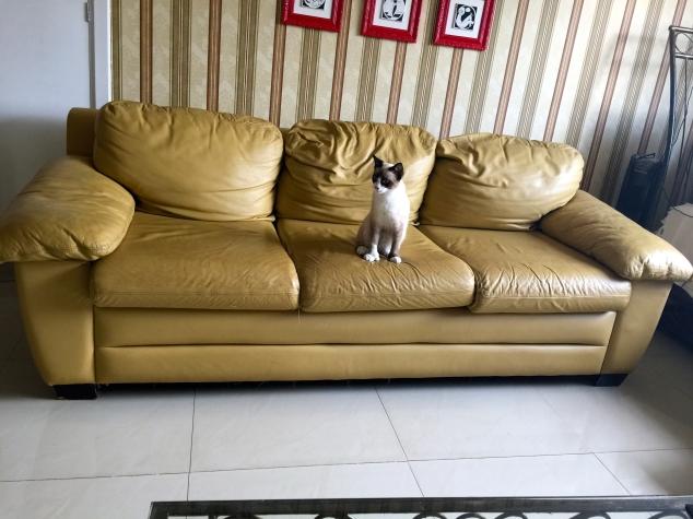O sofá derrota. E vejam bem, minha filha tem quase 10 anos!!!