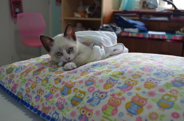 E ultimamente elas ganharam esta gatinha! A Cleo já pego a máquina e fez um book da gata! Bebê sofre!