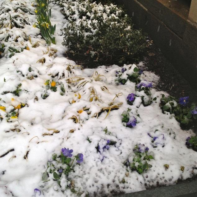Neve castigando as plantinhas...