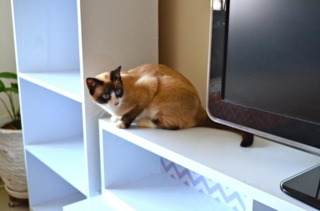 inspeção final… Já repararam que onde eu vou, esta gatinha vai cheirando atrás?!