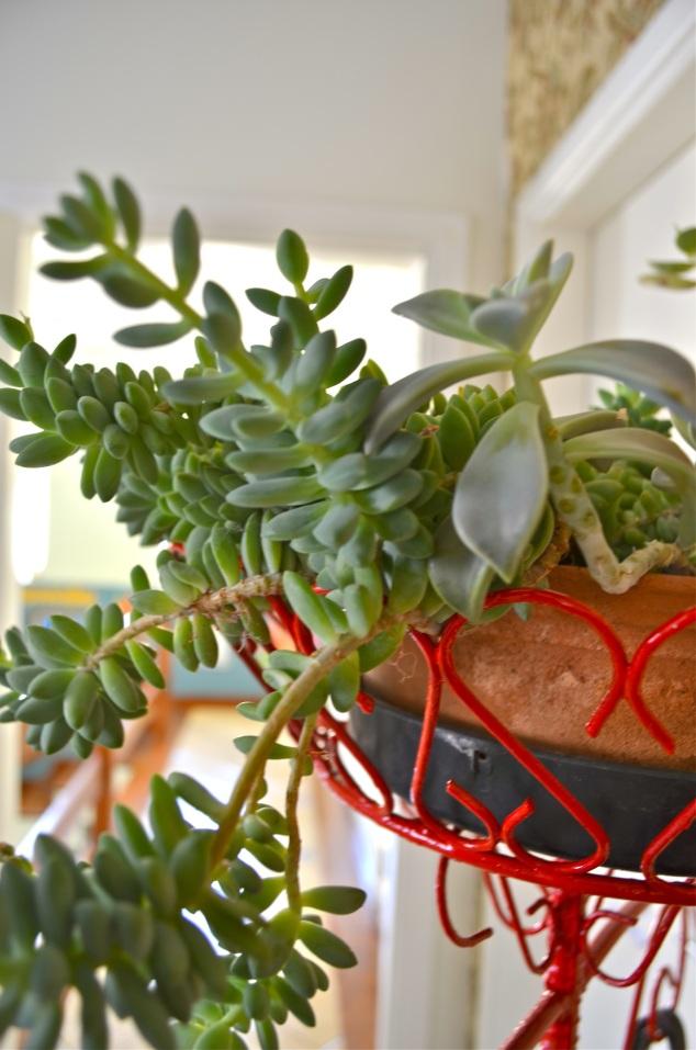 O suporte de plantas virou cabideiro. Pedi pra minha tia quando vi abandonado no sítio dela. Pintei de vermelho. O vaso grande de suculentas estava lá embaixo.